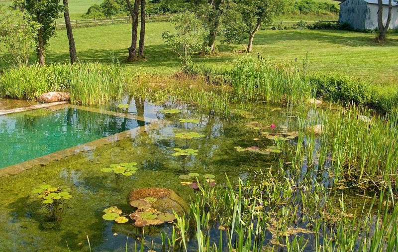 Diseño y Construcción de Piscinas Naturales, piscinas ecológicas ...