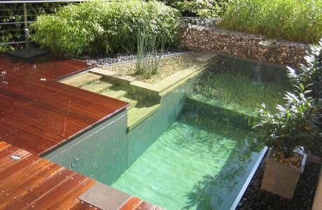 piscina2 piscina ecologica
